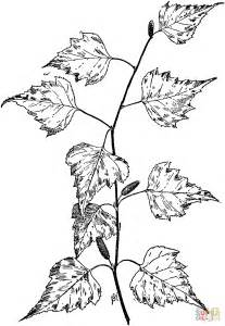 birch tree branch coloring page supercoloring com