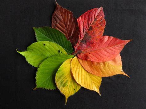 Autumn Leaf free photo autumn leaves fall leaves autumn free