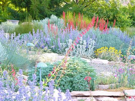 xeriscape succulents my obsession and xeriscaping pinterest