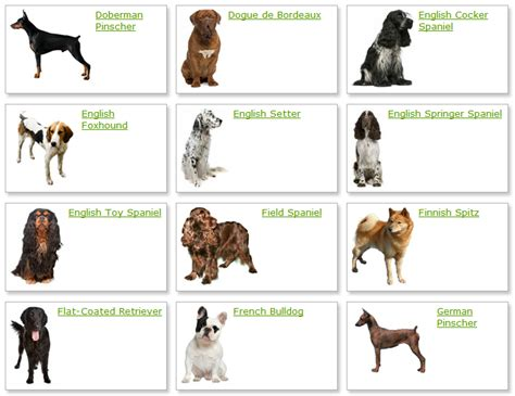 all different breeds all breeds with names and pictures