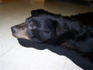 Brown Bear Rug For Sale Rugs