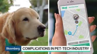 uber for walking wag the uber for walking is drawing uber like scrutiny bloomberg