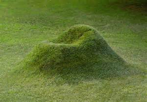 grass backyard grow your own grass chair in your backyard bored panda