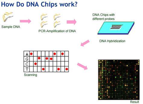 how do microchips work biotechnology genetic engineering