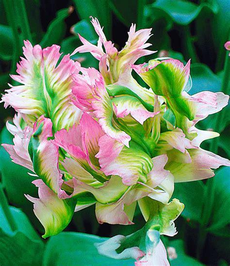 Garten Und Pflanzen Katalog by Baldur Garten Katalog Baldur Garten Katalog