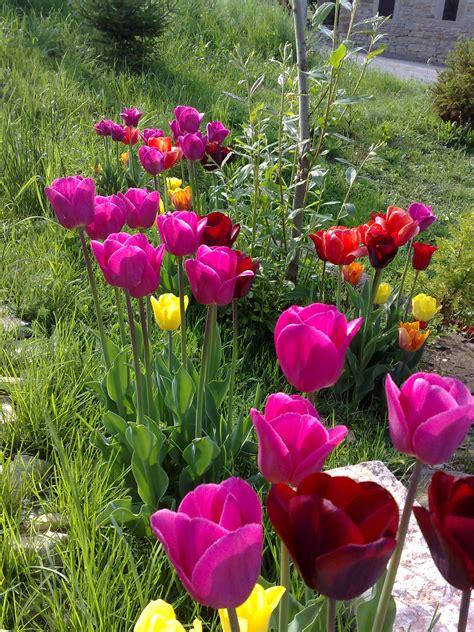foto di giardini fioriti giardini fioriti podere terra nuova