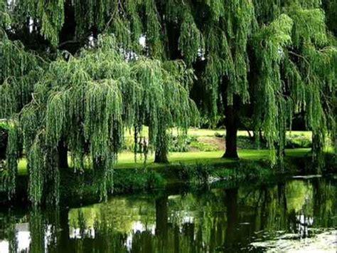 the salley gardens britten yves saelens