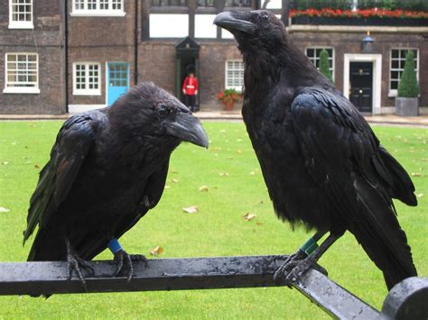 birds castles and time immemorial learning from dogs