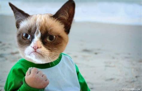 Success Cat Meme - cycle jerk mixed meme wednesday success kid grumpy cat