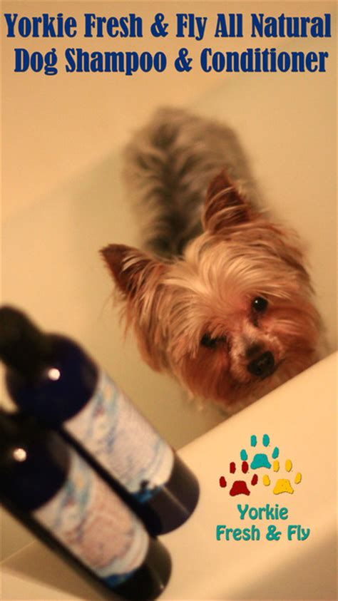 best yorkie products yorkie shoo best yorkie grooming products organic holistic pet care moringa