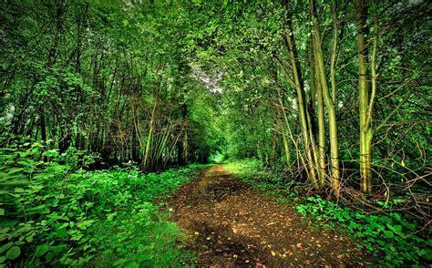 imagenes de bosques increibles naturaleza hermosa del bosque descarga im 225 genes de alta