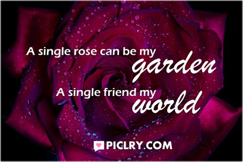 rose can rose garden quotes like success