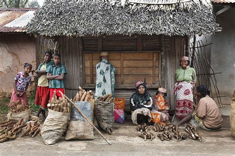 poverty cycle standard of living in madagascar history people culture and environment malagasy