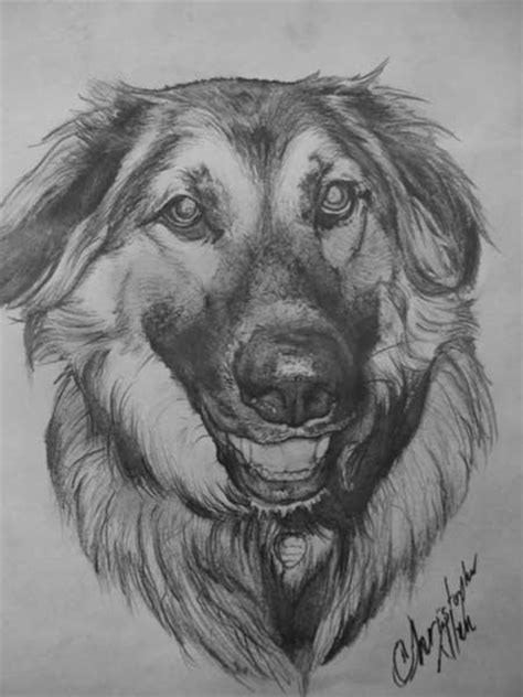 draw realistic puppy realistic drawing of a portrait how to draw litle pups