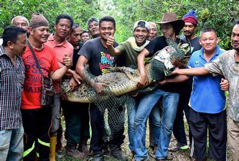 Multimeter Di Malaysia buaya tembaga sepanjang tiga meter ditangkap di kung