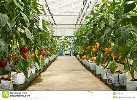 Vertical Hydroponic Garden - aeroponics plantation in glasshouse royalty free stock photo image 23851195