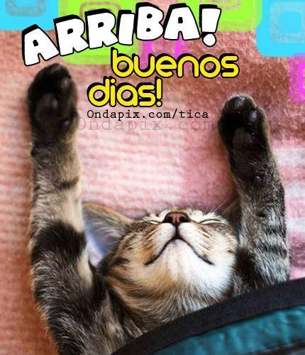 imagenes feliz lunes con gatos im 225 genes y memes super graciosos con frases chistosas de