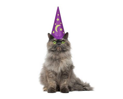 wizard cat wizard hat for your cat