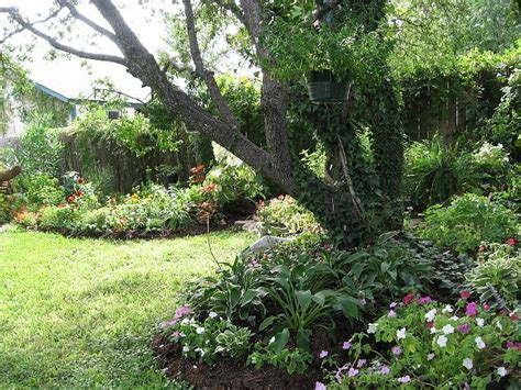 1000 images about under oak trees on pinterest gardens