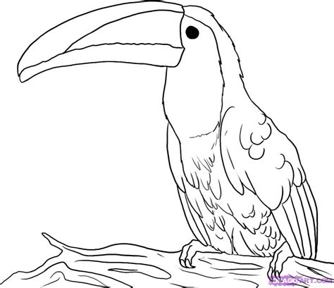 coloring pages of birds in the rainforest draw a toucan step by step drawing sheets added by dawn