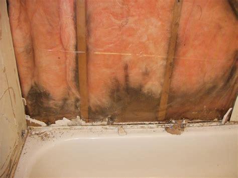 orange mould bathroom orange mold in bathroom best home design 2018