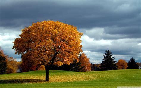 asus wallpaper tree allo image arbre automne nuages sombres feuilles jaune