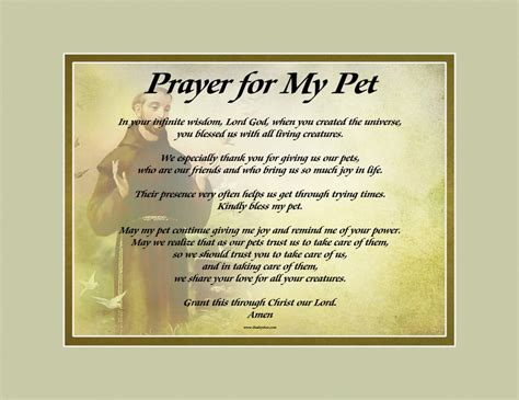 st francis background shown  prayer   pet