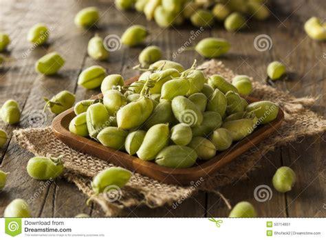 imagenes de garbanzos verdes habas verdes org 225 nicas frescas crudas del garbanzo foto de