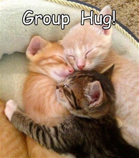 Cat Hug Meme - cat friendships lead to more harmony