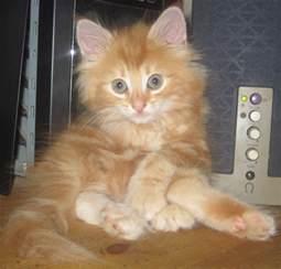baby kittens baby animals photo 19798351 fanpop