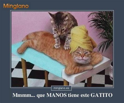 imagenes chistosos con frases chistosas imagenes chistosas de gatos con frases auto design tech
