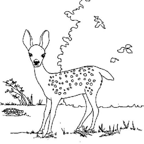fawn coloring download fawn coloring
