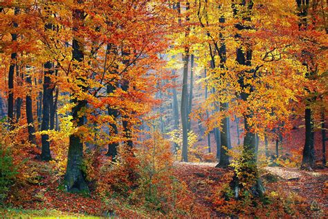 in fall what to expect from fall foliage this year how weather