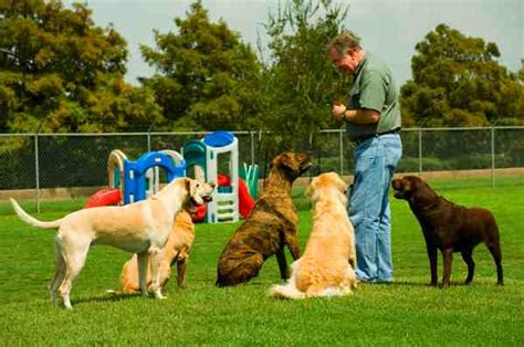 obedience for dogs choosing a school