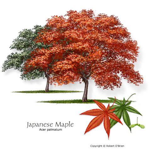texas tree selector tree description