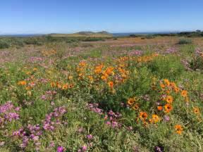 desert flowers desert flowers images reverse search
