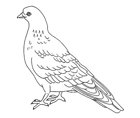 the coloring page free printable pigeon coloring pages for
