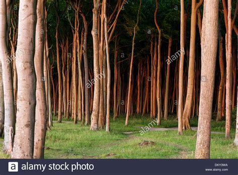 nienhagen wood in mecklenburg vorpommern germany image gallery mecklenburg vorpommern woods