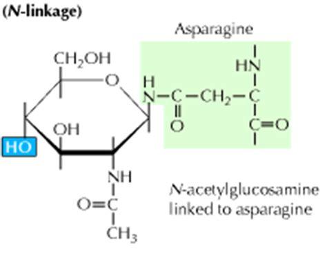 protein n glycosylation n linked glycosylation driverlayer search engine