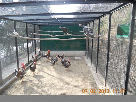 community gabbia le nuove 5 voliere e suoi abitanti cocincina poultry