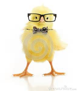 Cute little chicken in black eye glasses and bow isolated on white