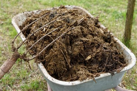 Steer Manure In Vegetable Garden Why Do We Add Manure To Plants Advantages Of Manure