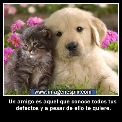 imagenes de amor y amistad para subir al facebook mensajes de amor y amistad para subir al facebook imagui