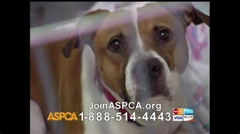 aspca puppies aspca tv commercial for neglect and animals ispot tv