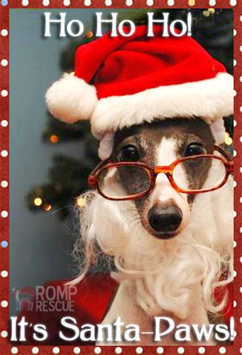 funny dog christmas msyugioh photo  fanpop