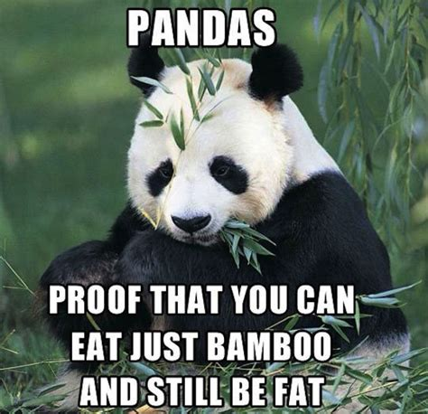 Funny Panda Memes - 18 hilarious fat loss memes supplement centre
