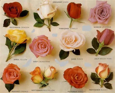 types of roses flowers world