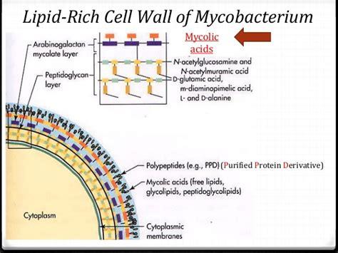 tuberculosis bacteria diagram anti tuberculosis drugs