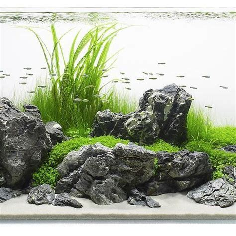 nice tank aquarium landscape aquascape design