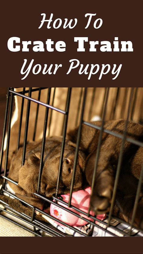 how to crate a puppy feed your and puppy food water wiring diagrams wiring diagrams